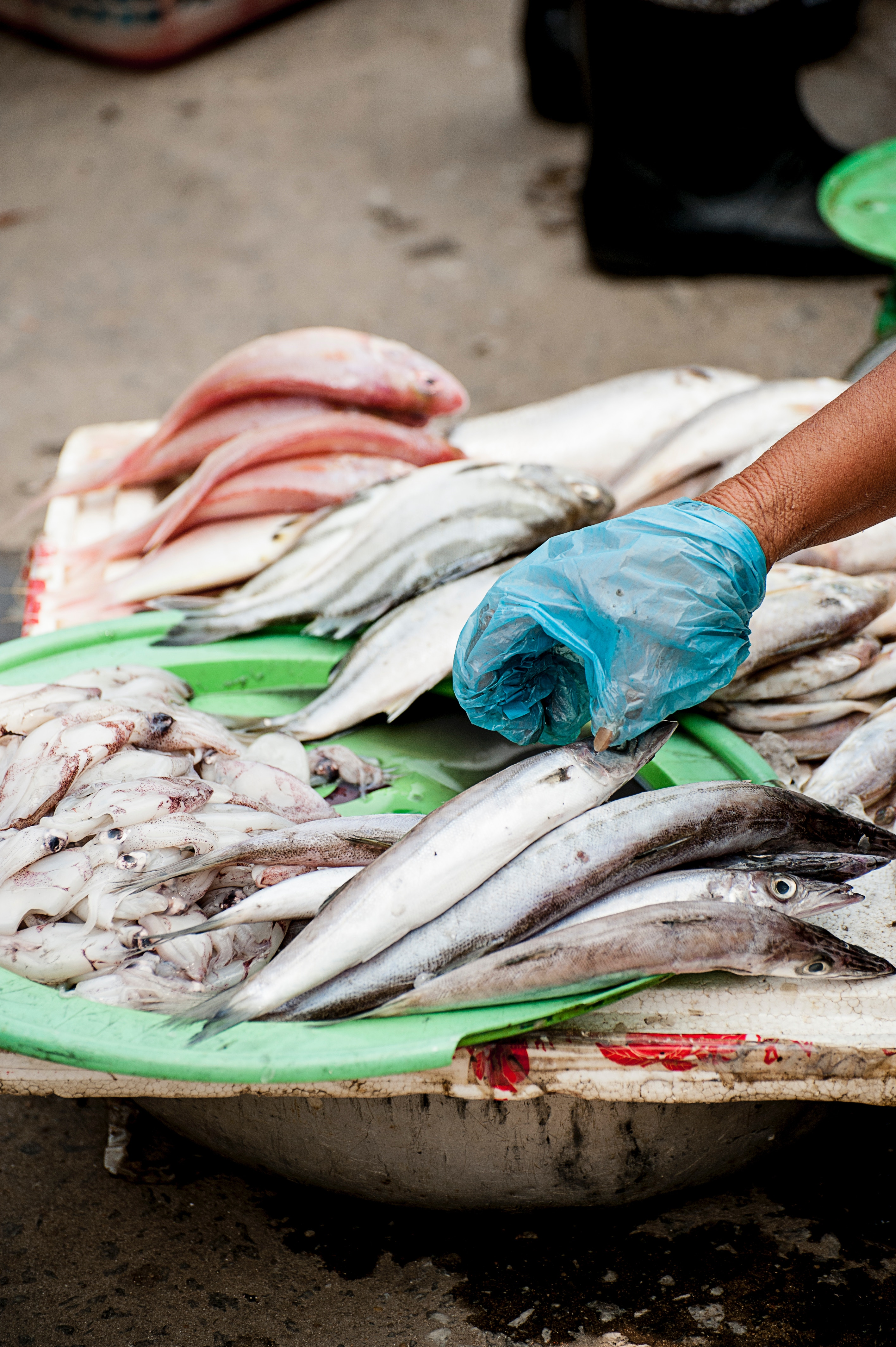 Voedselweb vis plastic oceaan