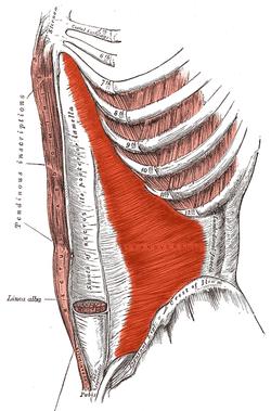 welke spieren train je met hoelahoepen