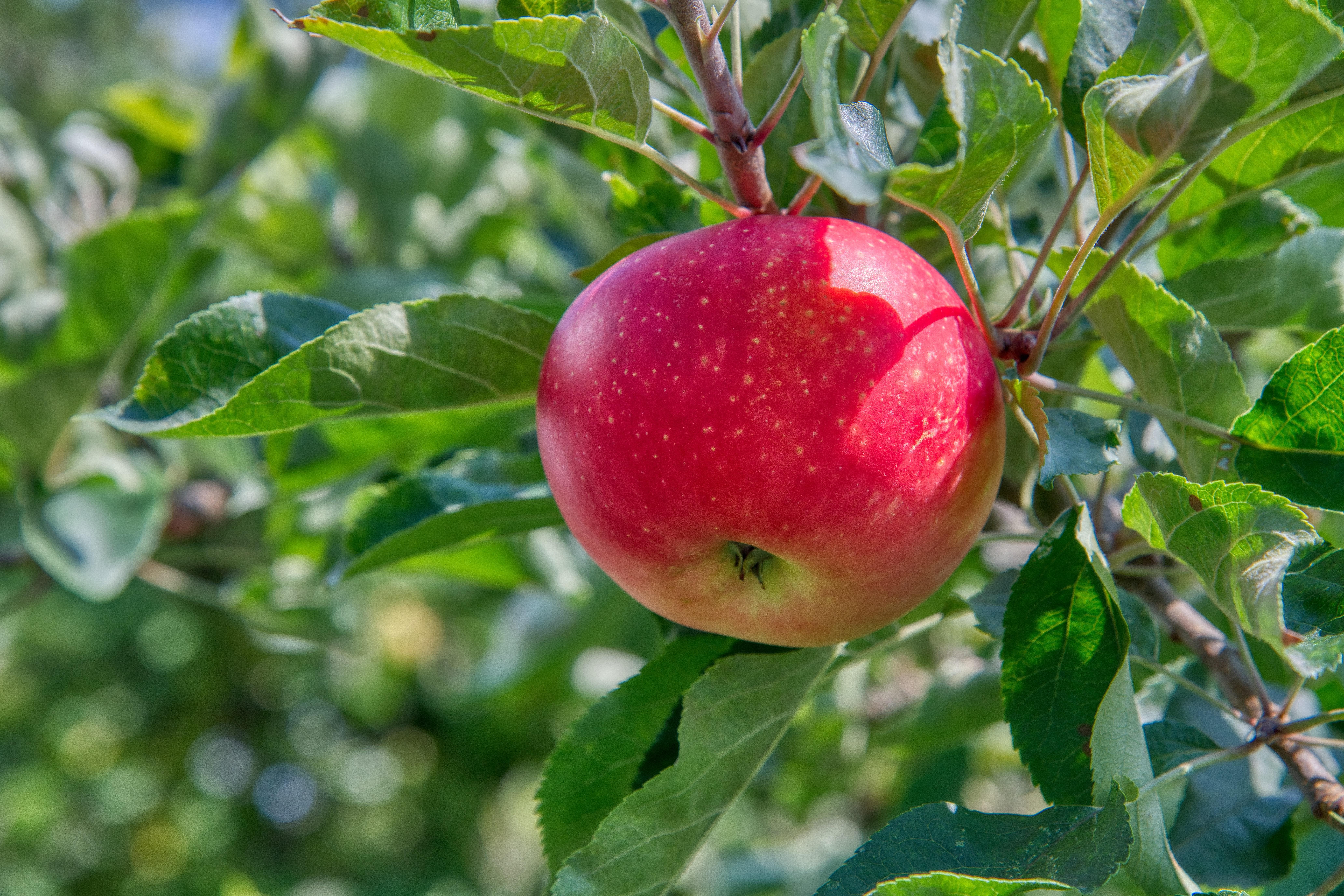 appels gezond