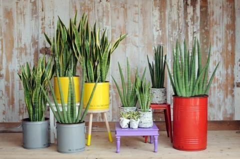 Waarom planten in huis goed voor je gezondheid zijn!