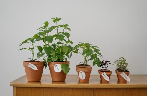 Kruidenplantjes uit de supermarkt: zo houd je ze levend