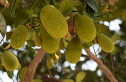 Recept: zo maak je vegan rendang van jackfruit