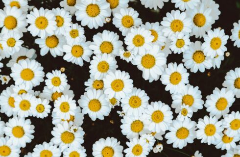 7 x natuurlijke pijnstillers in plaats van ibuprofen of paracetamol