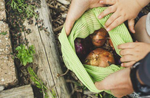 Voedselverspilling: 6 manieren om het tegen te gaan