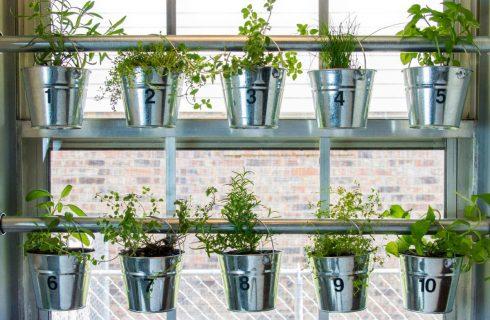 Deze 6 krachtige planten helpen bij Acné, rimpels en een onzuivere huid