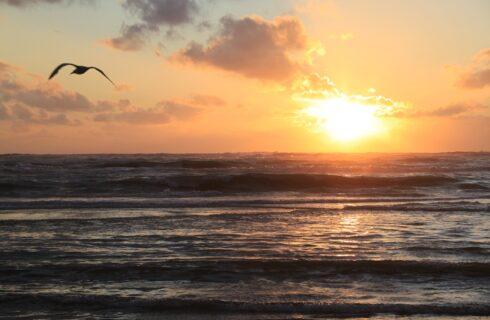 Surfen in Nederland, dat doe je op deze plekken!