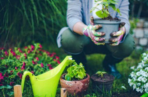 In 5 stappen je eigen moestuin beginnen (in je tuin of op je balkon)