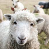 Dit zijn de leukste Nederlandse duurzame instagrammers
