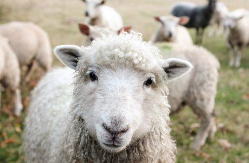 3 manieren waarop ook jij diervriendelijke keuzes kan maken!