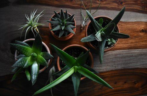 Deze 5 kamerplanten met 'zuiverende krachten' wil je in huis halen!